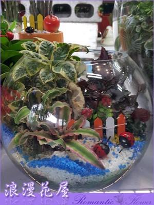 精緻玻璃球盆栽 3-138