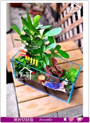 玻璃鋼組合盆栽~長型款c091211