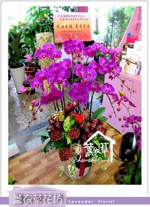 高雅蝴蝶蘭10珠aa5701
