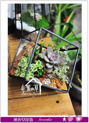 水立方立體玻璃&多肉設計 107042005