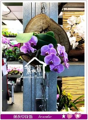 璧掛~蝴蝶蘭設計 107011416