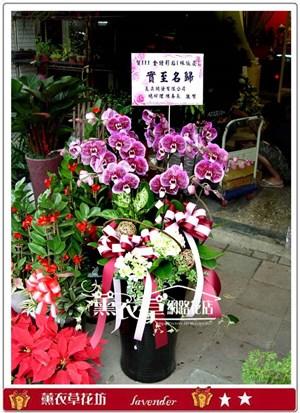 高雅蝴蝶藍8朱y32321