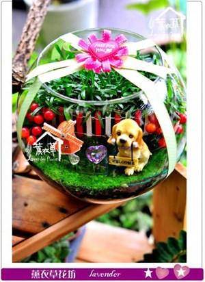 玻璃缸設計c091209