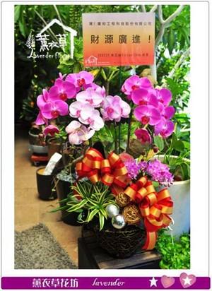 蝴蝶蘭禮盆b112603