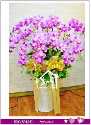 豪華胡蝶蘭106010614