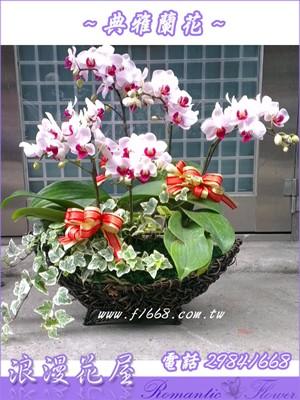 桌上型5株蝴蝶蘭D85