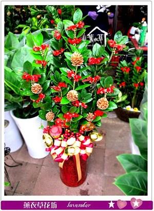 金錢樹盆栽c030533