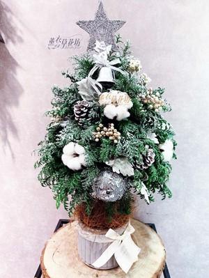 聖誕樹/聖誕節/開幕送禮 /盆栽/盆景~10712012