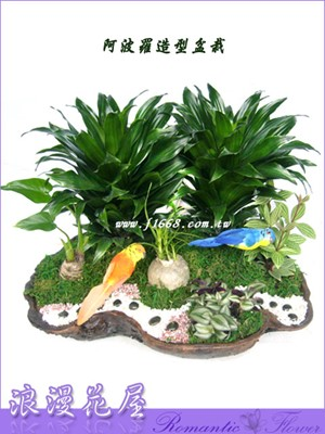 阿婆羅造型盆栽 3-88